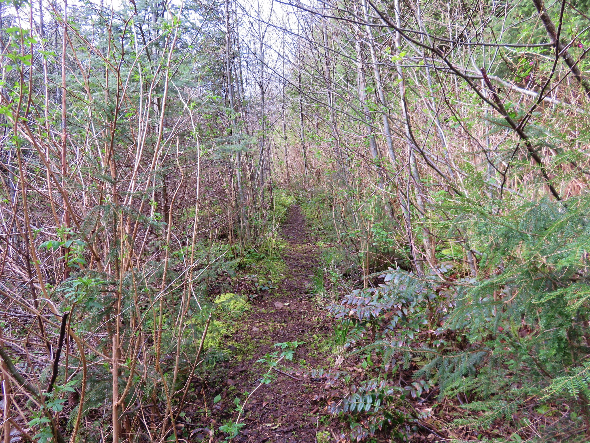 User Trail