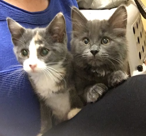 Our new kitties: Sunny and Fifi
