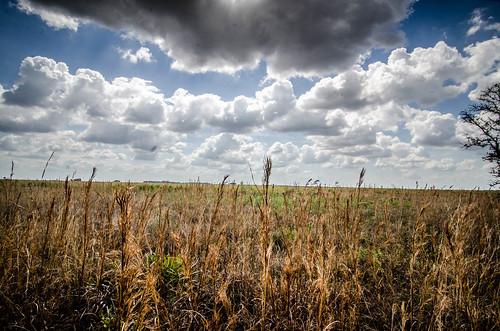 Kissimee Prairie-15