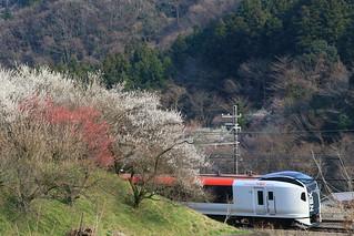 梅とE259系 N'EX