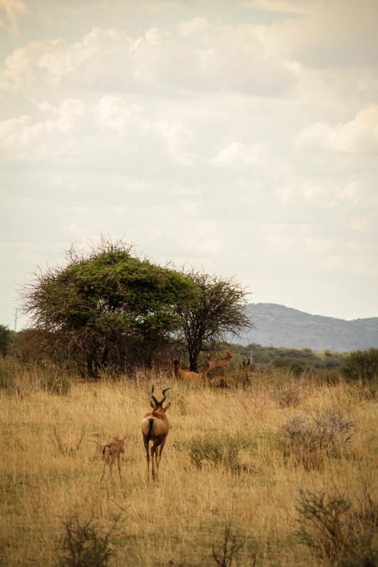 Wildes Namibia