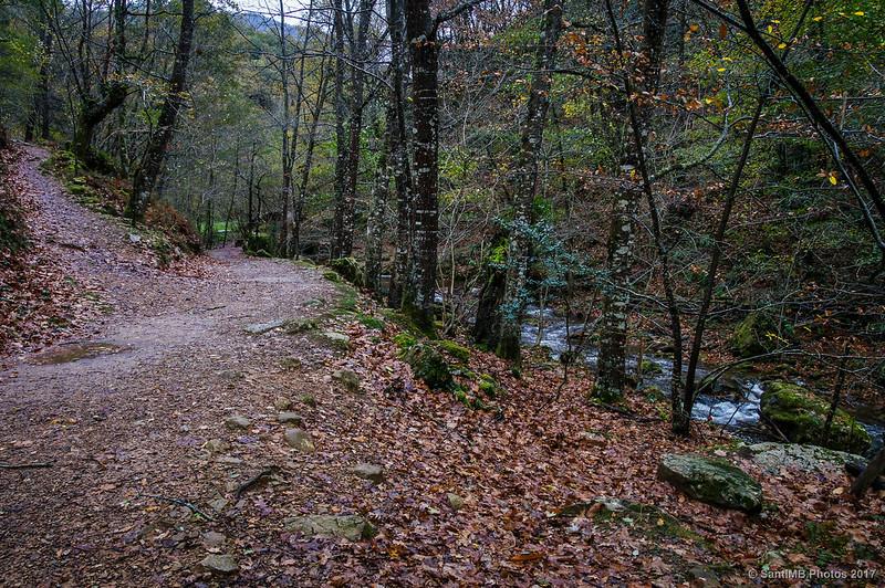 Bifurcación llegando a la Cascada de Xorroxin