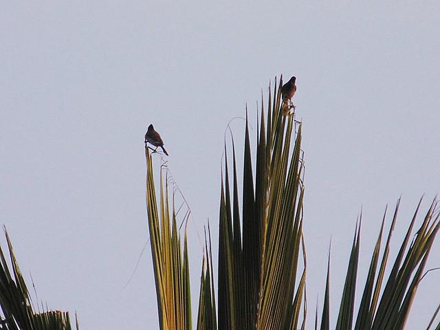 Bird Watching - Sparrows