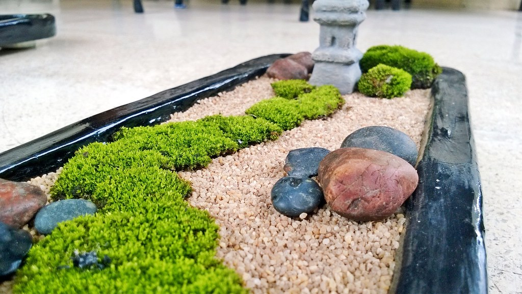 mini zen garden nature moss in my mini zen garden auf hartono flickr. Black Bedroom Furniture Sets. Home Design Ideas