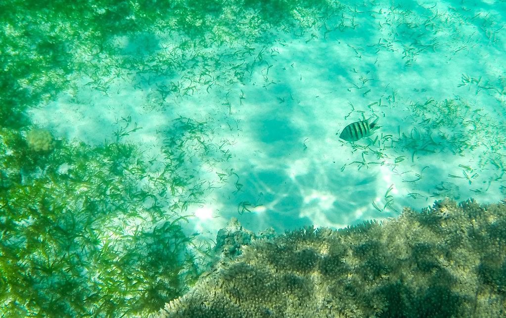 Camiguin Island - Day 3 - 2015 (11)