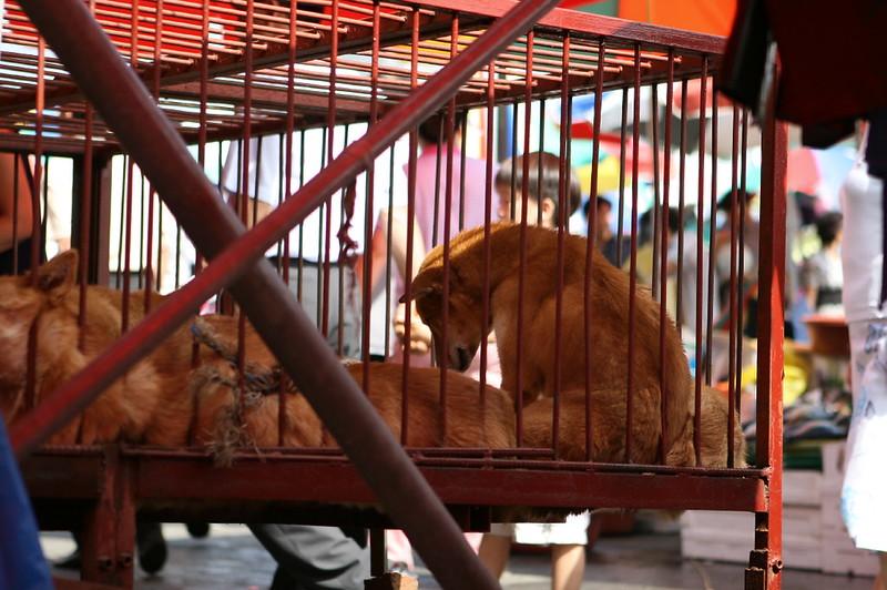Seongnam Moran Dog Meat Market