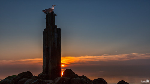 Gull on the lookout