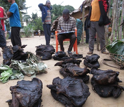 projet jeton Kakongo