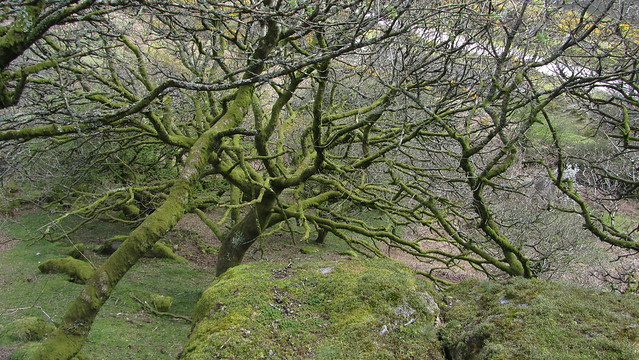 Trees below Whitehill Tor upper