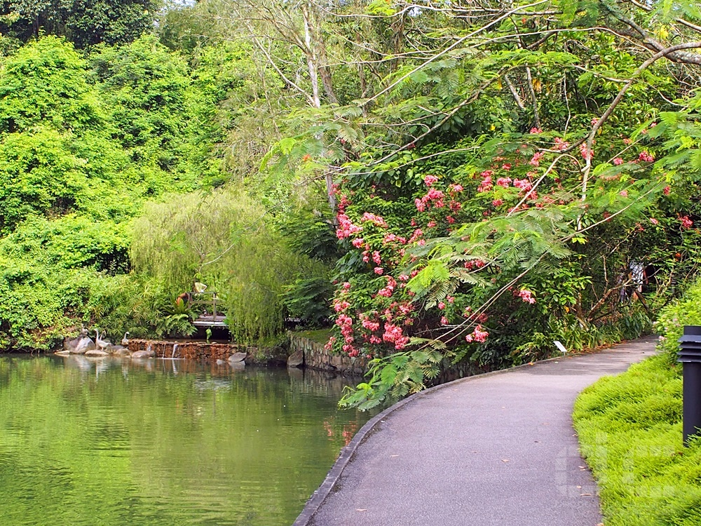 botanic gardens, singapore, singapore botanic gardens, swan lake, tanglin gate, where to go in singapore, sbg,unesco