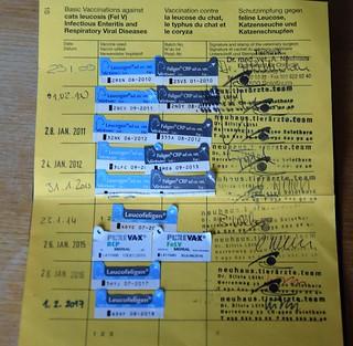 Tabby Immunisation Permit 31.03 (1)