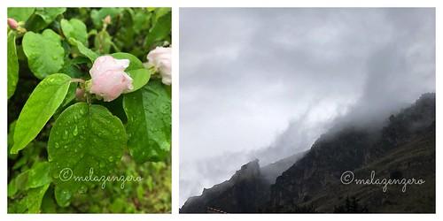 melo e pioggia