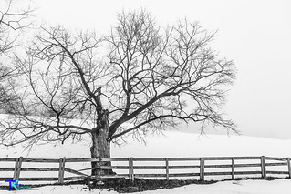 Tree and Fence BW 2 | by Tim_NEK