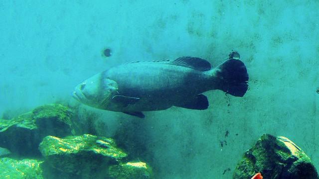 Image Result For Mote Aquarium