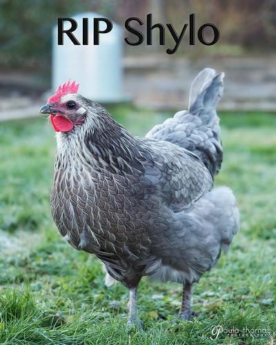RIP Shylo