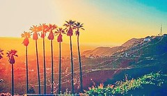 HOLLYWOOD SIGN AT SUNSET Losangeles La Discoverla Cali Palmtrees