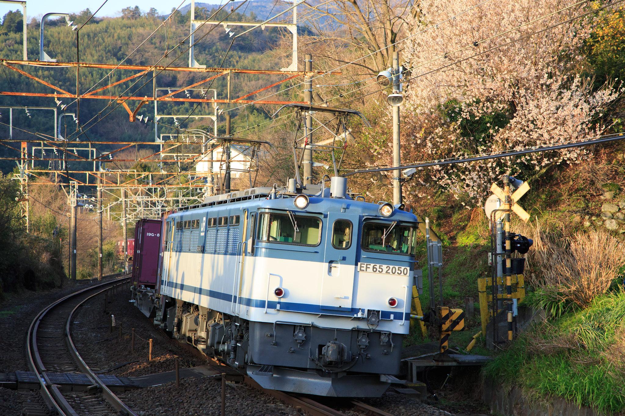 EF65 2050 / Tokaido Line