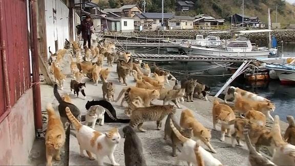x_lon_cats_150303