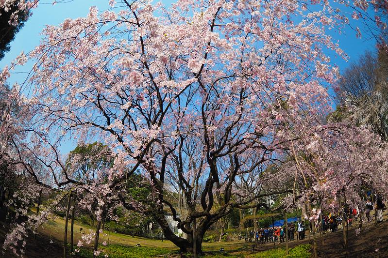 都立庭園-六義園|東京 Tokyo