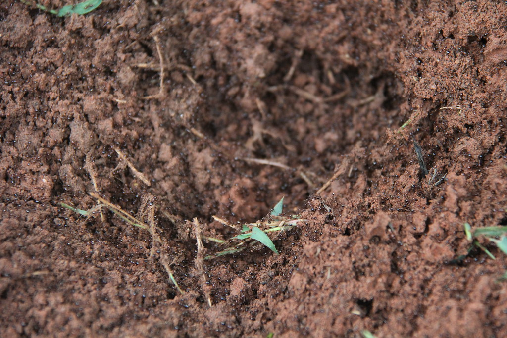 Will Fire Ants Build Nests In Sand Box