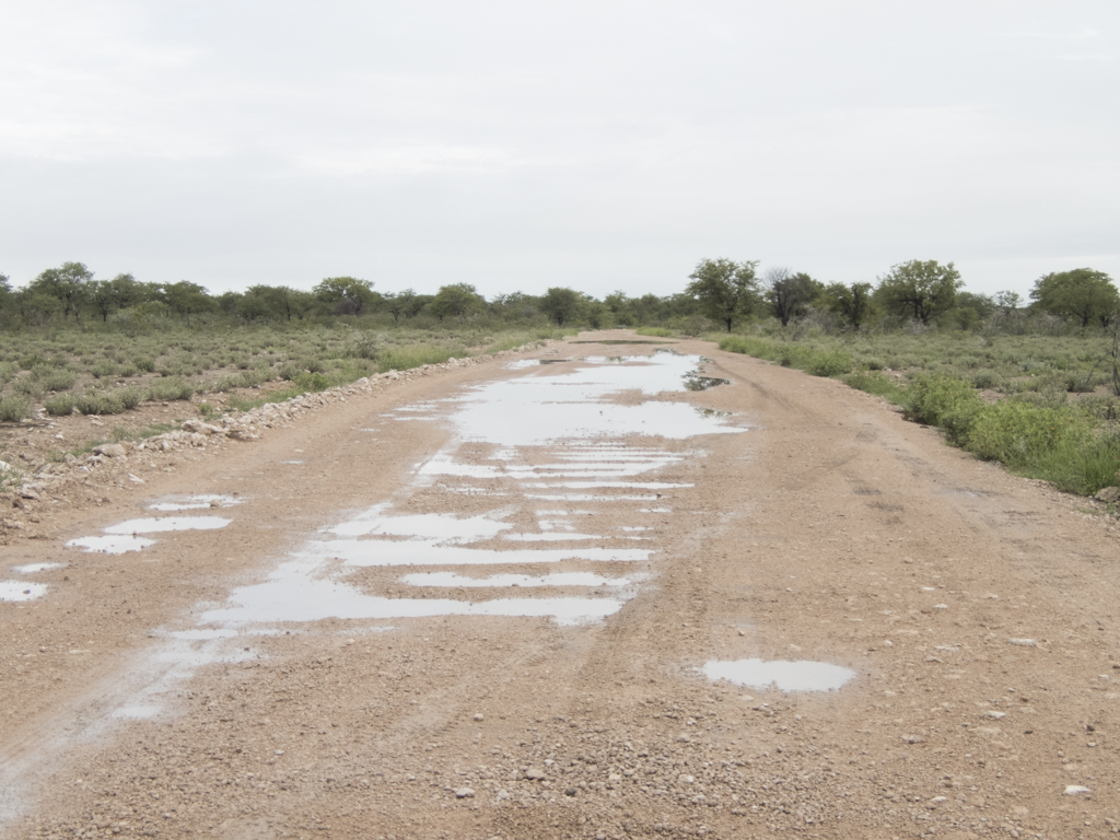 Halali Camp Etosha NP
