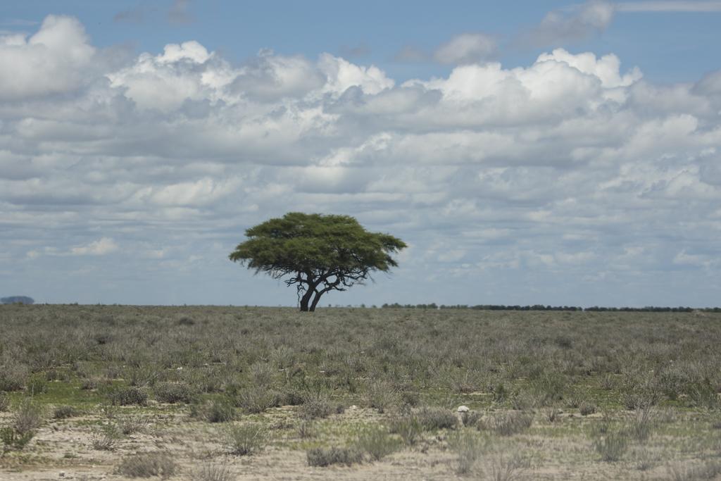 Etosha NP.  Namibia