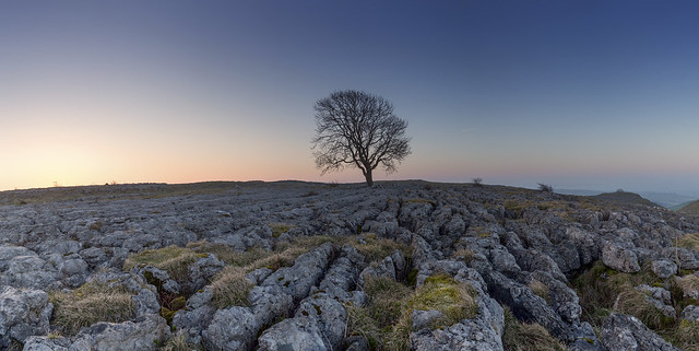 20170408-Malham Tree