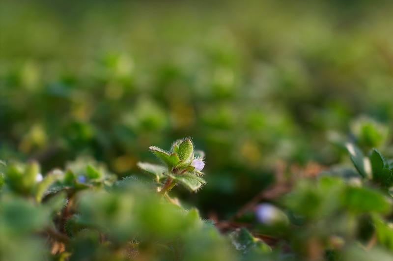 小さな花弁