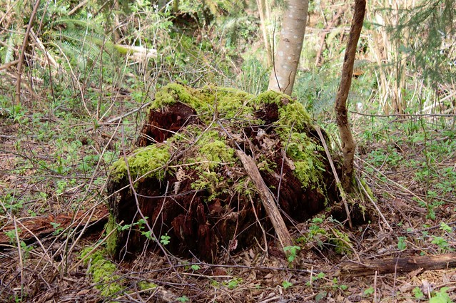 Another stumps