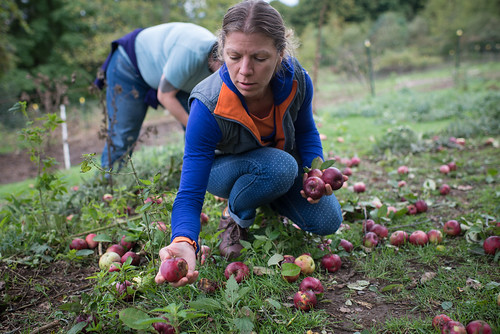 Joanna Collecting Apples | by goingslowly