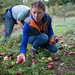 Joanna Collecting Apples