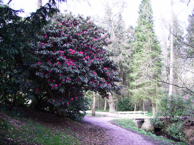 Balbirnie Park Rhododendron Collection