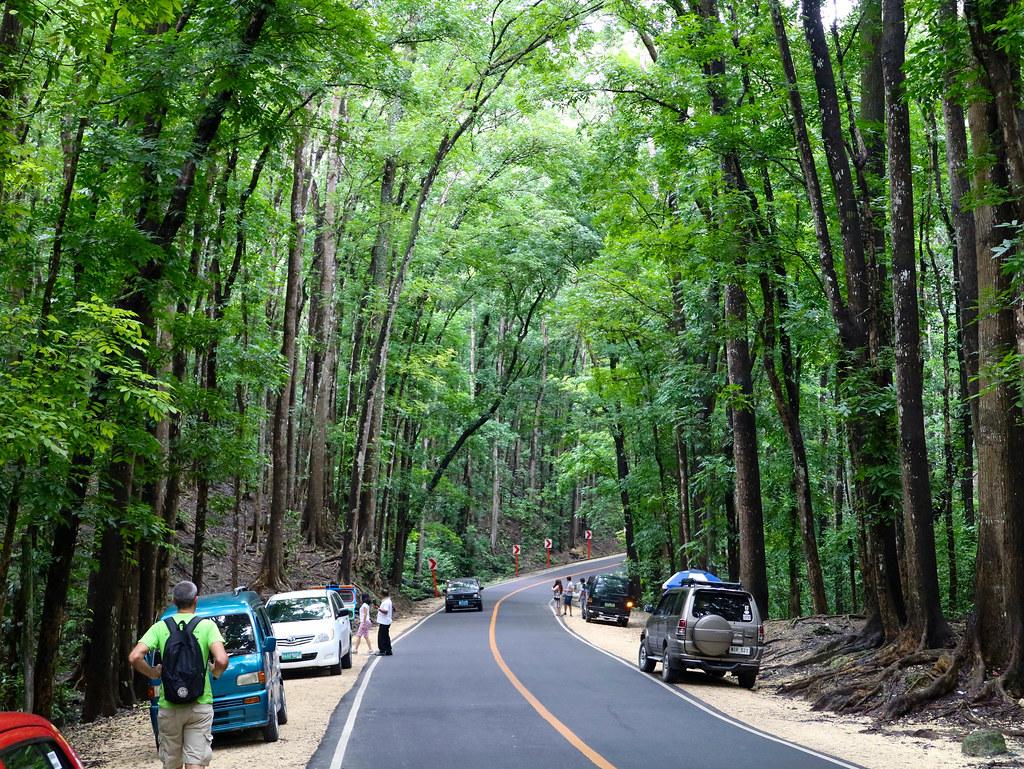 Man made Forest Bohol