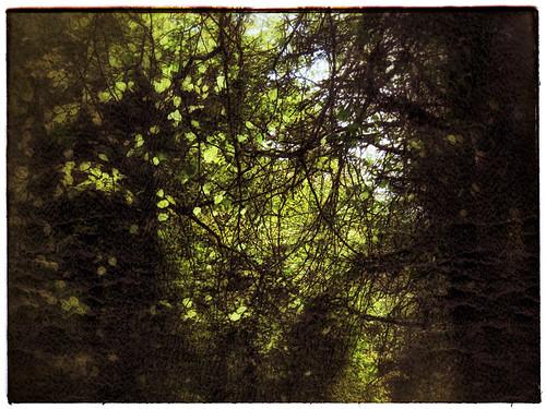 Irish trees in Snapseed