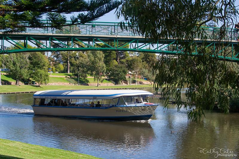 Adelaide Icon - Popeye