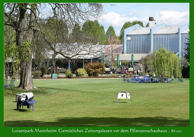 Gartenreisen ... Luisenpark Mannheim im April 2017. Impressionen. Spielen Kühe gerne Fußball? Typische blaue Park-(Liege-)Stühle, ein Rhein-Neckar-Zeitung-Leser vor dem Pflanzenschauhaus, die sonnenbadende Wasserschildkröte, eine Weißwangen- oder Nonnengans und Laugenbrezel beim Freizeithaus ... Fotos und Collagen: Brigitte Stolle Mannheim