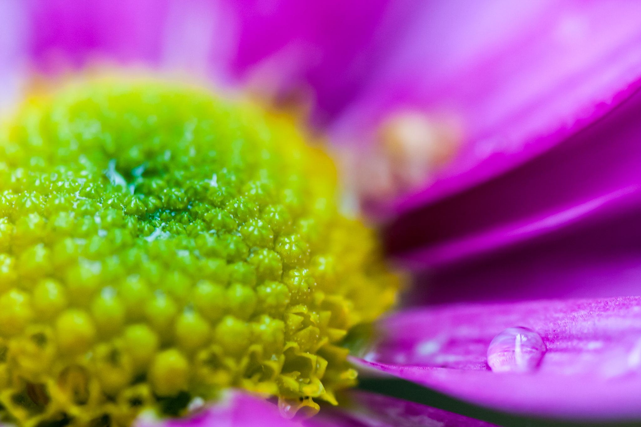 "Spring will bring: ""Flower-DOF-Drop"" ;-)"