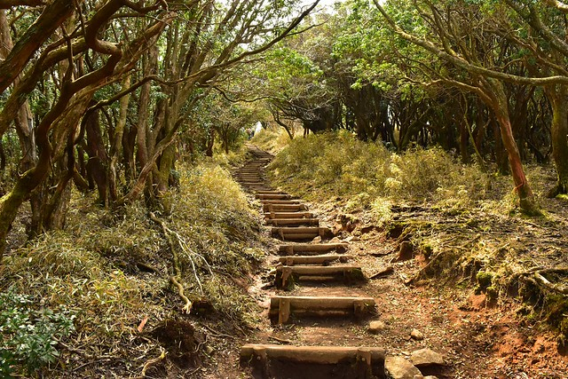達磨山 樹林帯の階段