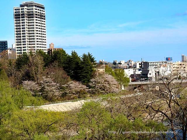 桜 広瀬川