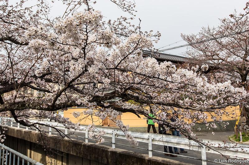 Paseo-Filosofia-Kioto-8