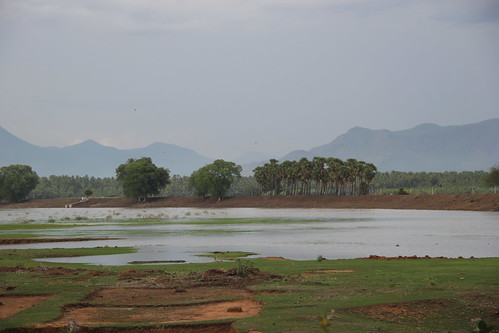 View of a Kanmai or irrigation tank near Melakkal in Madurai.