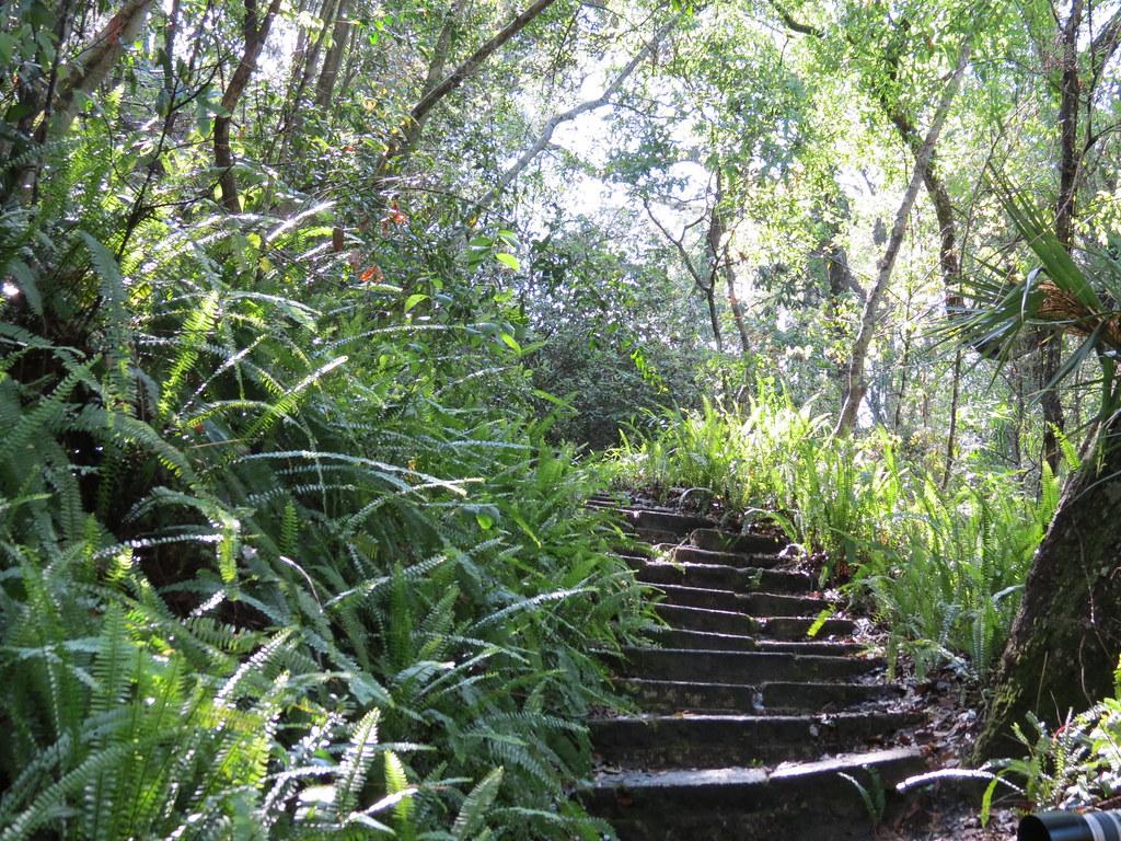 Ravine Gardens State Park Florida No Editing Sandy Auriene Sullivan Flickr