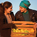 Apple farming is the main agriculture activity in Prespa