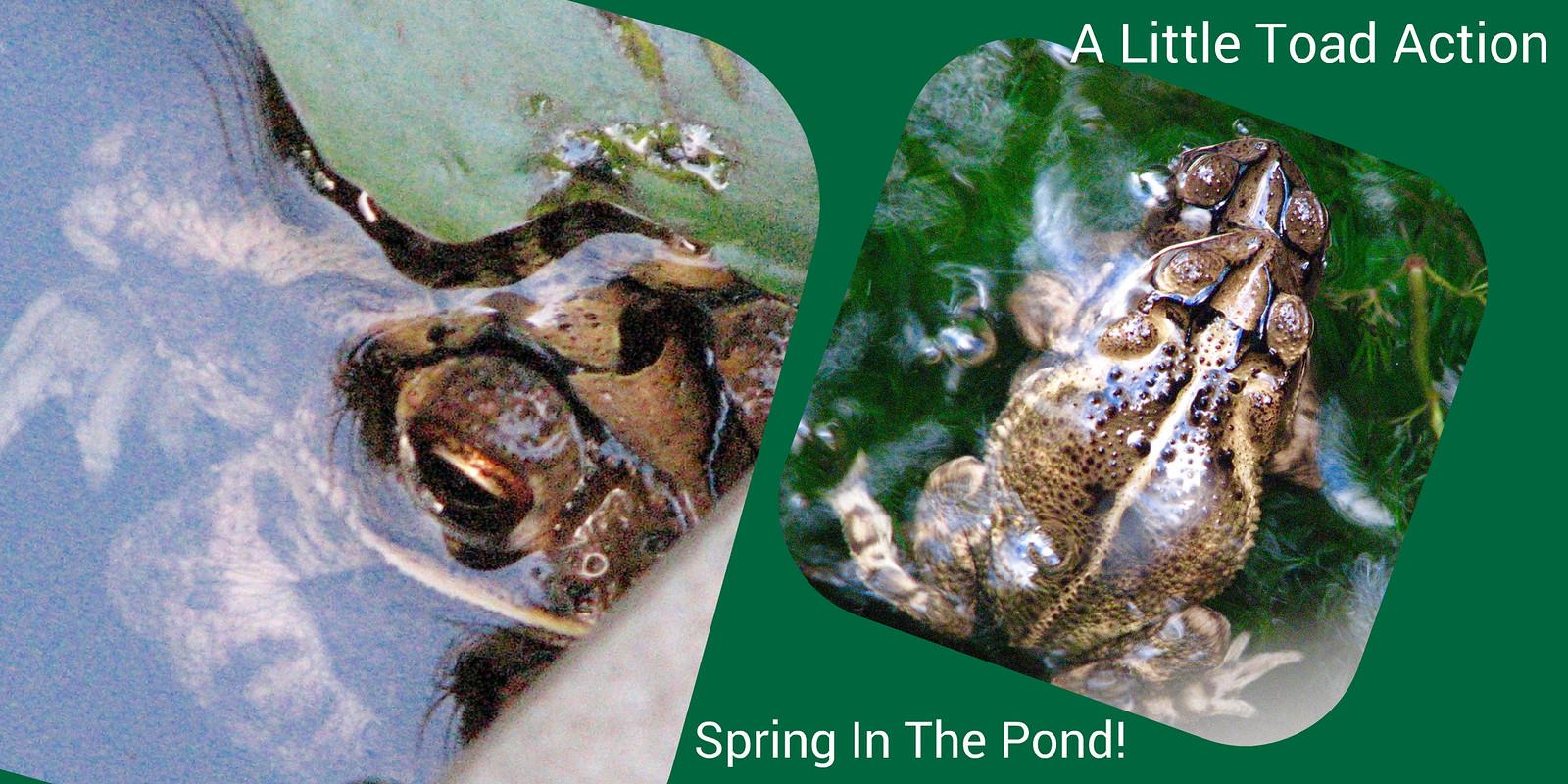 Spring In The Pond