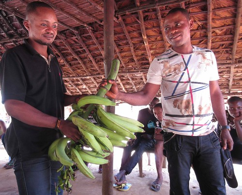 Younger brother Thoms, Pharaon, gives gift of bananas