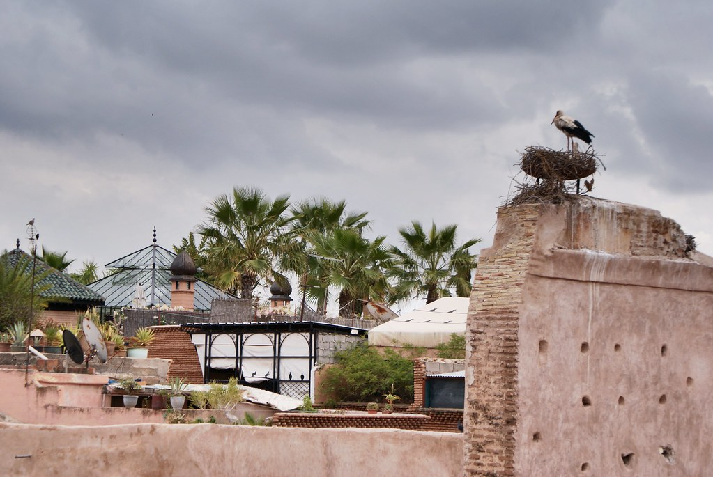 Nid de cigogne à l'entrée des Tombeaux Saadiens à Marrakech.