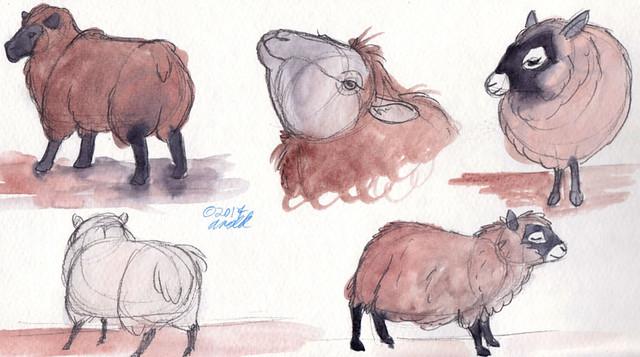 4.25.17 - Sheep!