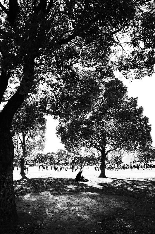 休日の木陰