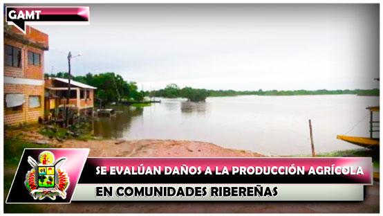 se-evaluan-danos-a-la-produccion-agricola-en-comunidades-riberenas