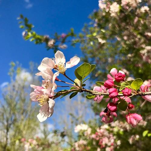 spring in A2 #springhassprung #nofilter